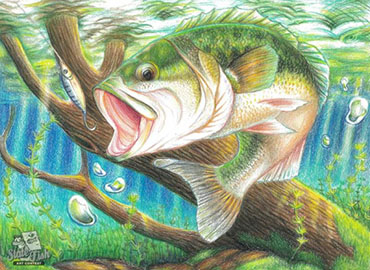Habitat partnership sponsors fish art contest