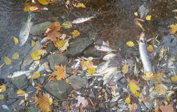 Locals Devastated By Middle River Fish Kill